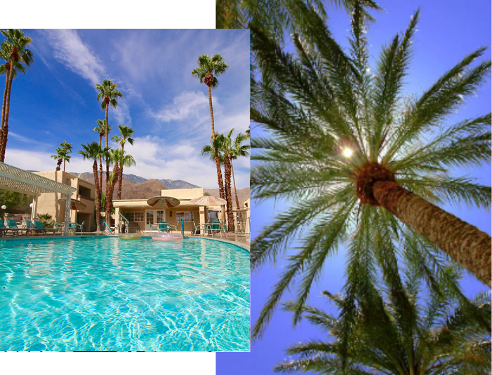 Photos of resort pool and palm trees.